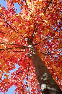 Climate, Change, Could, Affect, Fall, Foliage, Timing