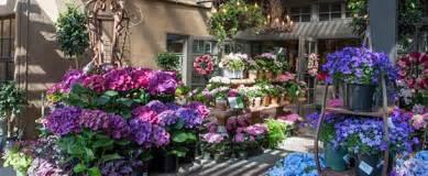 rogers garden center best garden centers in orange county 171 cbs los angeles