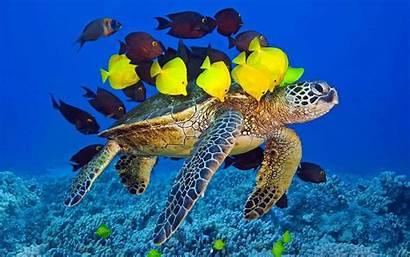 Underwater Turtle Ocean Fish Yellow Animals Birds