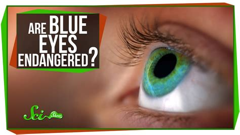 How Many Hair And Blue by Are Blue Endangered
