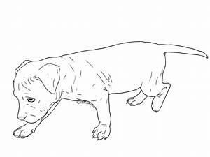Simple Pitbull Dog Drawing