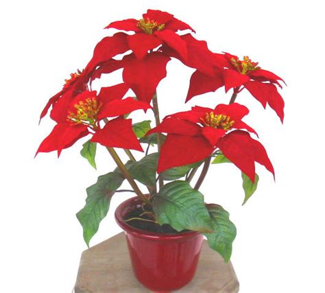 china artificial christmas flowers poinsettia