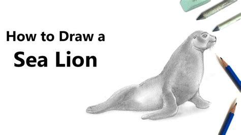 draw  sea lion  pencil time lapse zoo