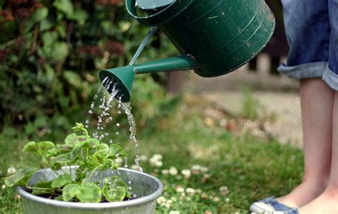 pictures of watering plants how to water your plants