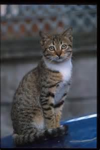 cat photos aya sofia cats