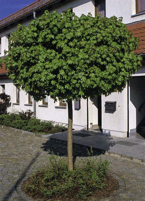 Baum Für Kleinen Garten by B 228 Ume Aus Der Baumschule Baumschule Salzburg
