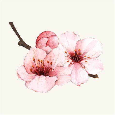 foto de Flor de cerejeira mão desenhada isolado Baixar vetores