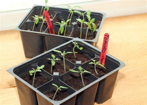 vegetable seed planting starting seeds indoors vs