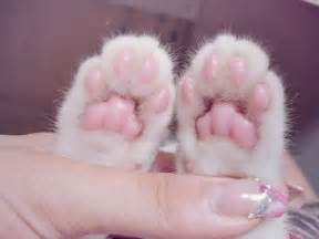 cat s paw goodnight vale goodnight allow me to explain the