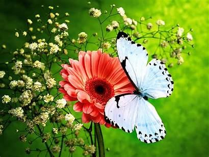 Butterfly Flower Wallpapers Nature Colors Pink Butterflies