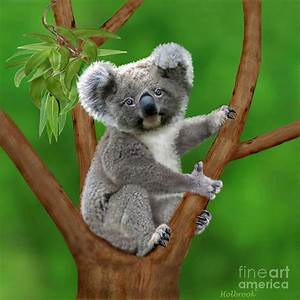 Blue-eyed Baby Koala Digital Art by Glenn Holbrook