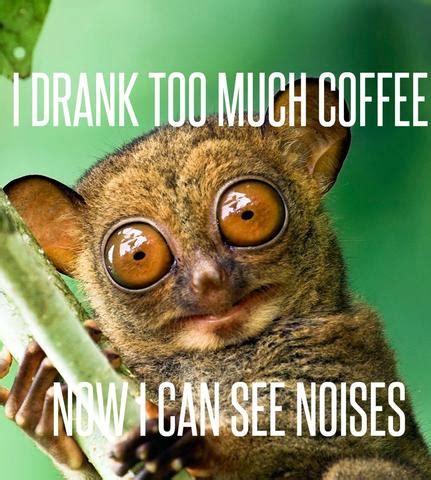 Too Much Coffee Meme - infusefruit fruit infuser water bottles