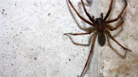 araignee dans la maison trucs et astuces lutter contre les araign 233 es chez vous