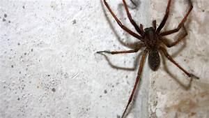 Faire Fuir Les Araignées : lutter contre les araign es chez vous toutes nos astuces ~ Melissatoandfro.com Idées de Décoration
