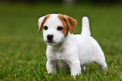 15 cutest puppies that will melt your heart barking royalty