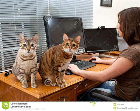 femme et chats au bureau d ordinateur photo libre de