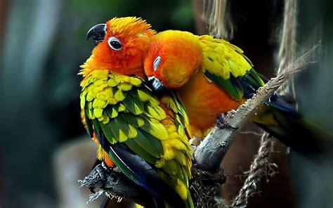 Lovely Birds Wallpaper ·① Wallpapertag