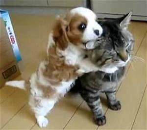 19 best images about Dogs and Cats on Pinterest