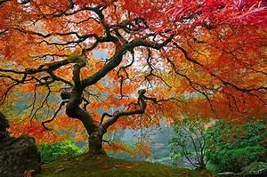 Les Plus Beaux Arbres Pour Le Jardin : les arbres les plus beaux du monde regard sur le monde ~ Premium-room.com Idées de Décoration