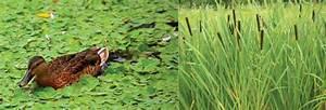 Aquatic Biomes  U2039 Opencurriculum