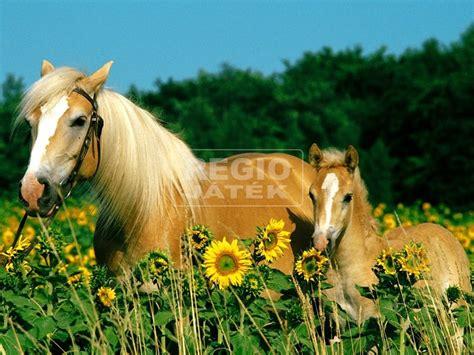 regio jatek lovak  darabos xxl puzzle