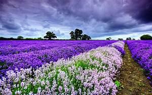 Flowers, Garden, Landscape, Love, Nature