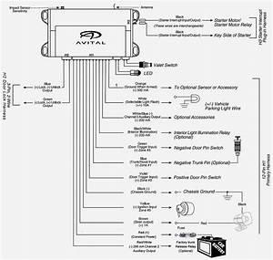 Avital Remote Start Wiring Diagram  U2013 Volovets Info