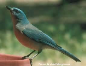 Blue Bird South Texas