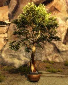 Baum Im Topf : baum im topf guild wars 2 wiki ~ A.2002-acura-tl-radio.info Haus und Dekorationen