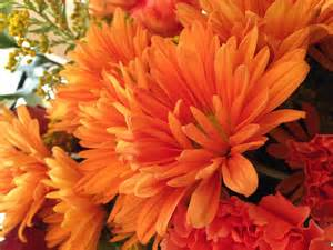 Orange Fall Flowers