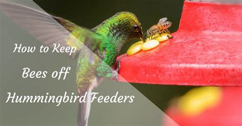 how to keep bees off hummingbird feeders colorgardening com