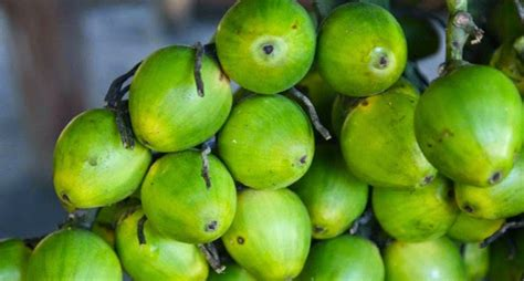 betel nut banned Port Moresby | Tribalmystic stories
