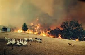 adelaide hills bushfire  disaster struck  adelaides