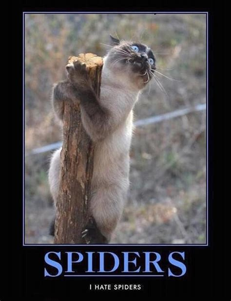 Funny Spider Meme - demotivational funny memes time for fum and interesting articles feafum