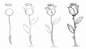 How to Draw a Rose - Dr. Odd