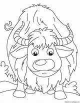 Yak Coloring Searching sketch template