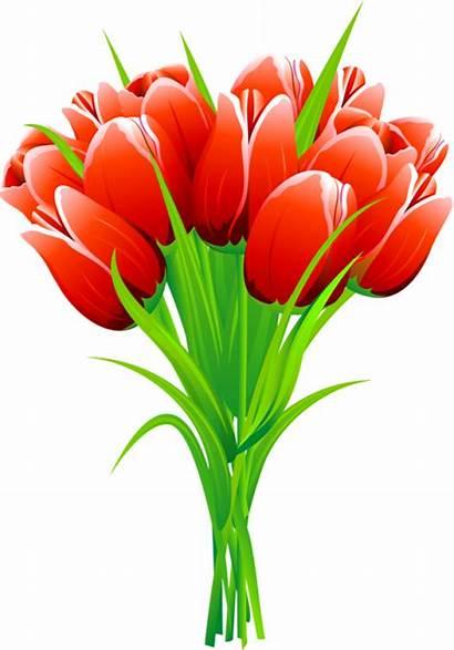 Flowers Clipart Tulips Bouquet Tulip Flower Spring