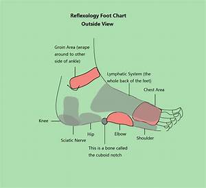 Reflexology Foot Chart