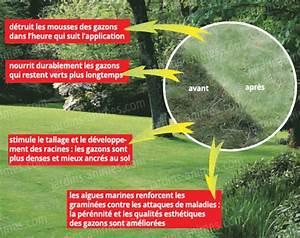 Anti Mousse Pelouse Sans Sulfate De Fer : sulfate de fer pelouse goulotte protection cable exterieur ~ Dailycaller-alerts.com Idées de Décoration