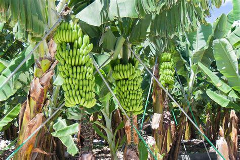 sukkulenten repräsentative arten zierpflanze repr 228 sentative arten sukkulenten pflanzen pflege und repr sentative arten