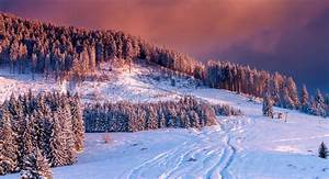 Winter Scene. Colorful Sunset Over Snow Covered Trees In ...