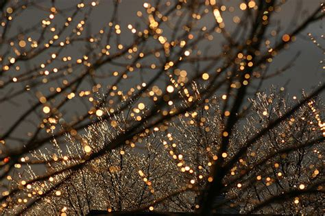 twinkling white christmas lights winter lights trees fairy lights nine pictures