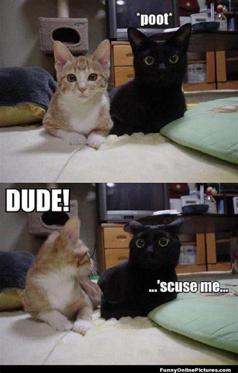 Cat Fart Meme - farting cat meme picture funny animals pinterest meme animal humour and funny pics
