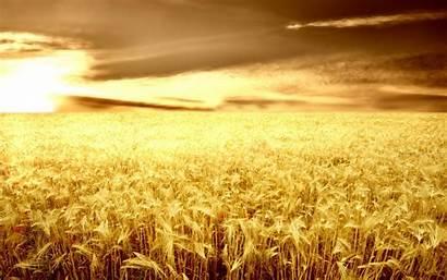Barley 1080p