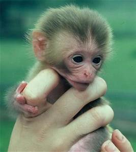 Cute monkey, cute little monkeys, pictures of cute monkeys ...