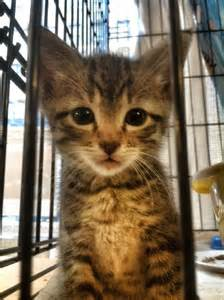 cat rescue nyc 37 best images about kittens up for adoption in nyc on