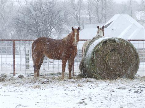 horses snow winter harrah ok