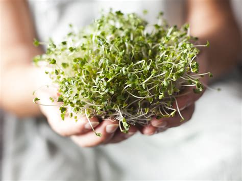 boost  broccoli sprouts  dr weil