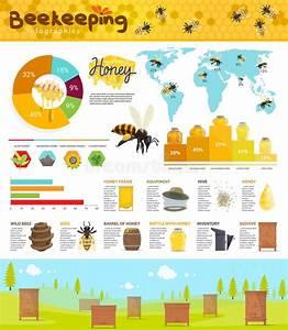 Bee Diagram Stock Illustrations  U2013 151 Bee Diagram Stock