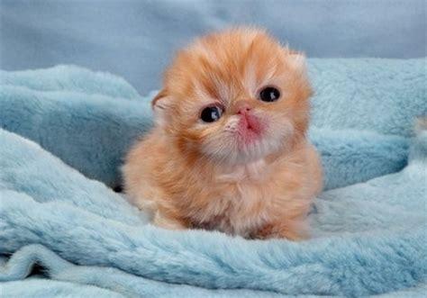 sad baby cat wallpapers